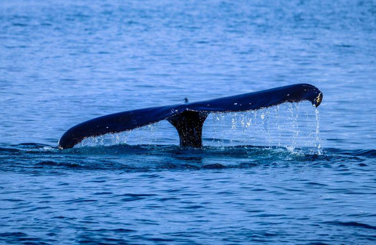 action-animal-ocean-464376