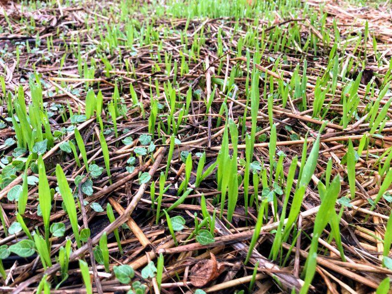 seeds-dispersal